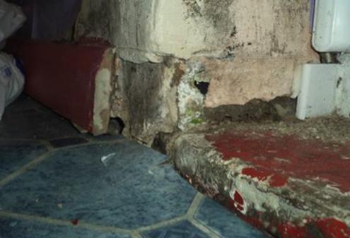 Arkas Law Housing Disrepair Pest Infestation